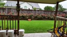 khoảng sân sau nhà lướt thướt giữa cơn mưa