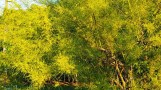 một loại hoa lạ không biết tên lá dài hoa vàng trông mềm mại
