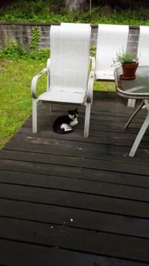 Mèo hoang tên boyfriend đến nằm chờ ăn