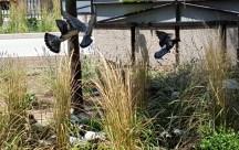Hên, chụp được vài tấm chim đang bay.