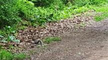 Một con sóc trong công viên. Mùa này sóc thường gầy, có lẽ vừa hết mùa đông và mới ra khỏi tổ