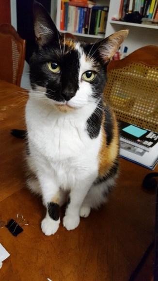 Nora, the writer cat