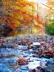 Suối mơ, bên rừng thu vắng