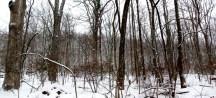 rừng sau nhà