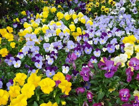 vườn hoa