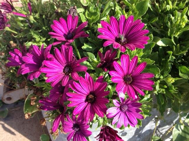 Purple flowers-small