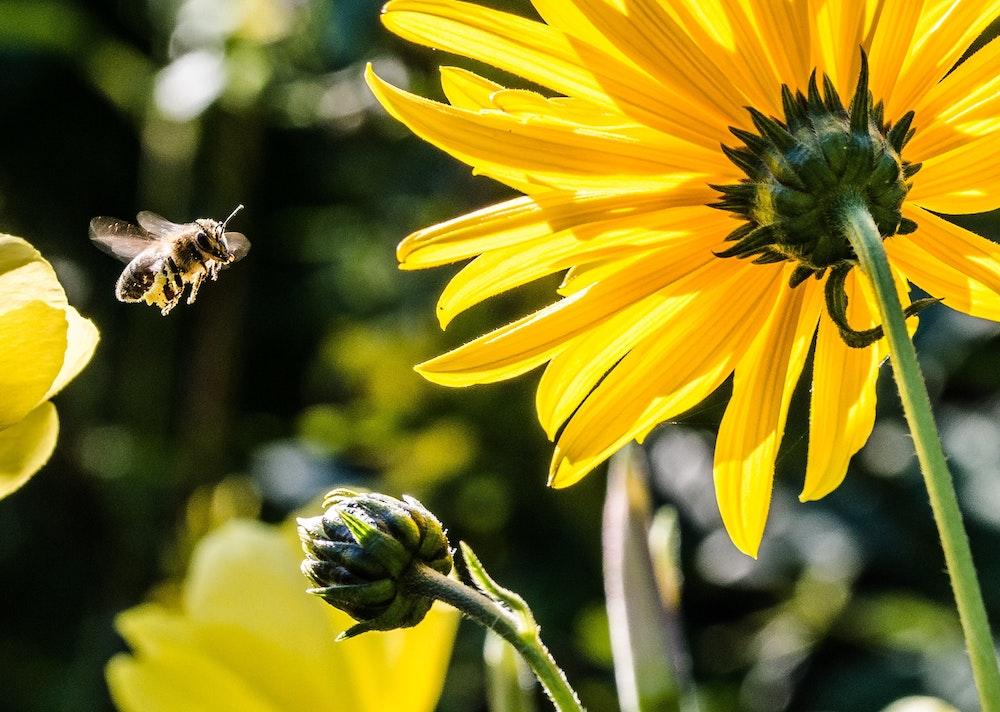 hardworking-bee