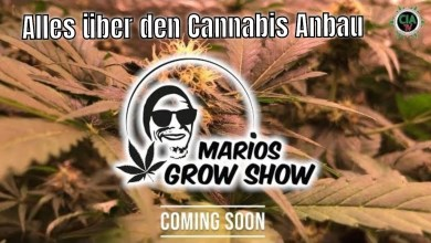 Photo of Cannabis selber anbauen – Marios Grow Show –  Teaser