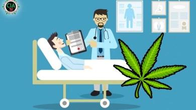 Photo of Cannabis heilt Coronavirus nicht, kann aber bestimmte Grippesymptome lindern