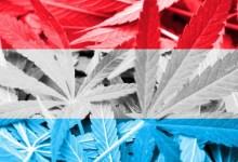 Photo of ++ AKTUELL: Cannabis-Legalisierung: Erste Infos zur Umsetzung in Luxemburg ++