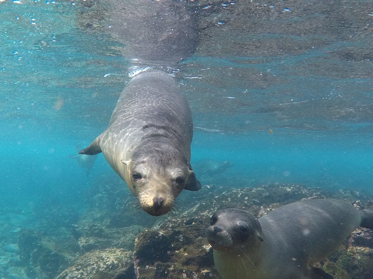 Galapagos Islands Activities