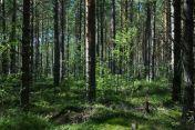 A Finnish woodland