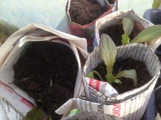 Seedlings full of promise