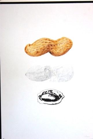 U10:FRUTOSECO|desenhoA|12.ºI