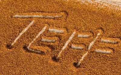 Un antico cereale senza glutine….il Teff