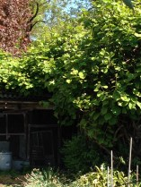 Turconi - La casetta delle vacanze