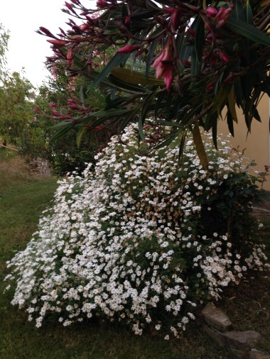 Agriturismo I Moresani - Margherite