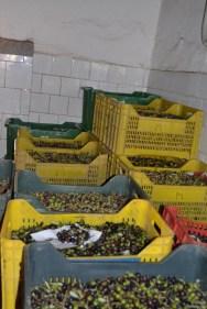 Le Olive dell'Architetto al Frantoio