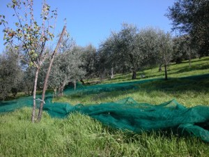 Reti dopo la Raccolta delle Olive