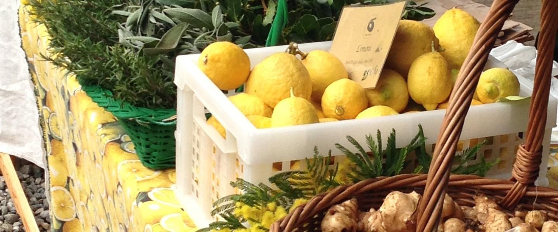 Mimose comestibili a Cascina Cuccagna