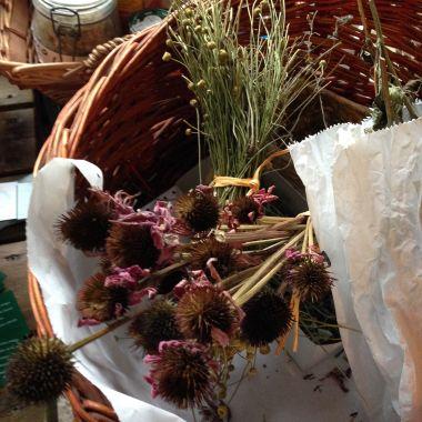 Mandillo Dei Semi Giardino degli Aromi Milano 2014