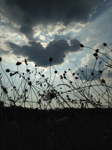 Gli Orti dell'Architetto - L'erba selvatica