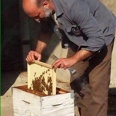 Laboratorio Apicolutra Veca - Mauro Estrae il Telaio