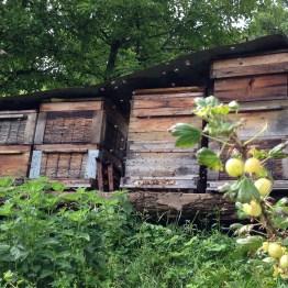Hiebler - Ecco da dove viene il miele dai fiori della frutta