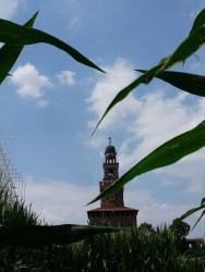 Quantomais - Pannocchie sul Castello Sforzesco