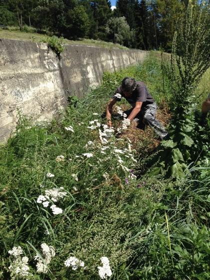 Raetia Biodiversità Alpine - Patate Sotto la Paglia il Muro