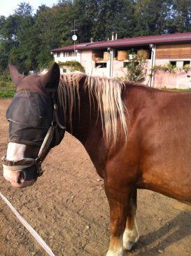 Zaffaroni Domenico - Il Cavallo
