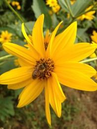 Agricola Cassani - Fiore con Ape