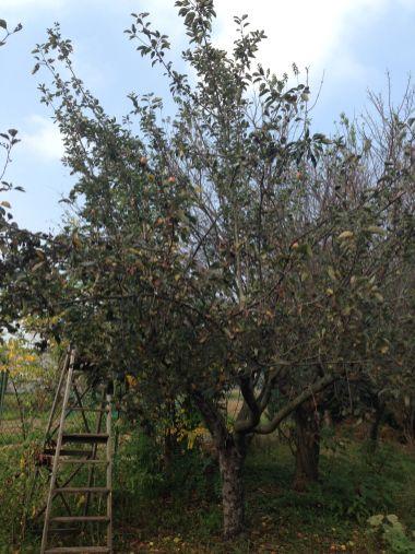 Agricola Cassani - Melo Antico
