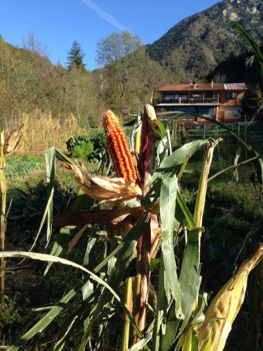 Agriturismo Prestello - Agriturismo dietro la Pannocchia