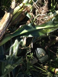 Agriturismo Prestello - Le Zucche nel Mais