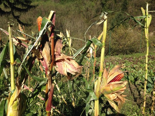 Agriturismo Prestello - Campo Mais Pannocchie