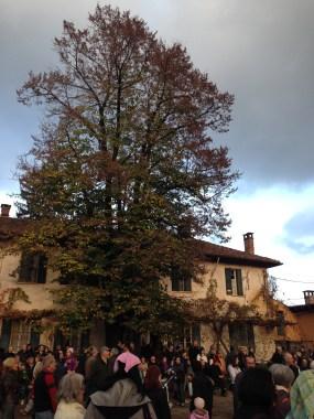 Fare San Martino - Il Grande Albero della Cascina Campazzo