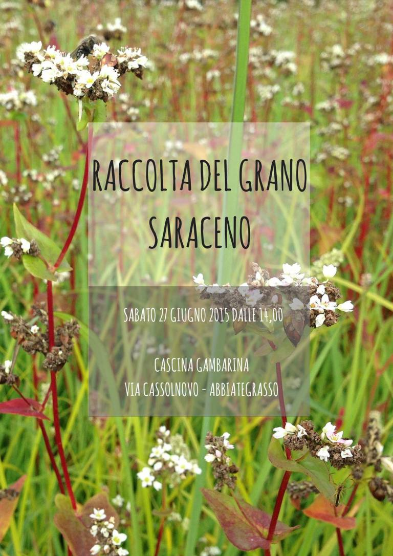 Tempo di Raccolta - Il Saraceno Da Marco Cuneo