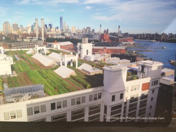 Exponymi Mostra - Rooftop Farm