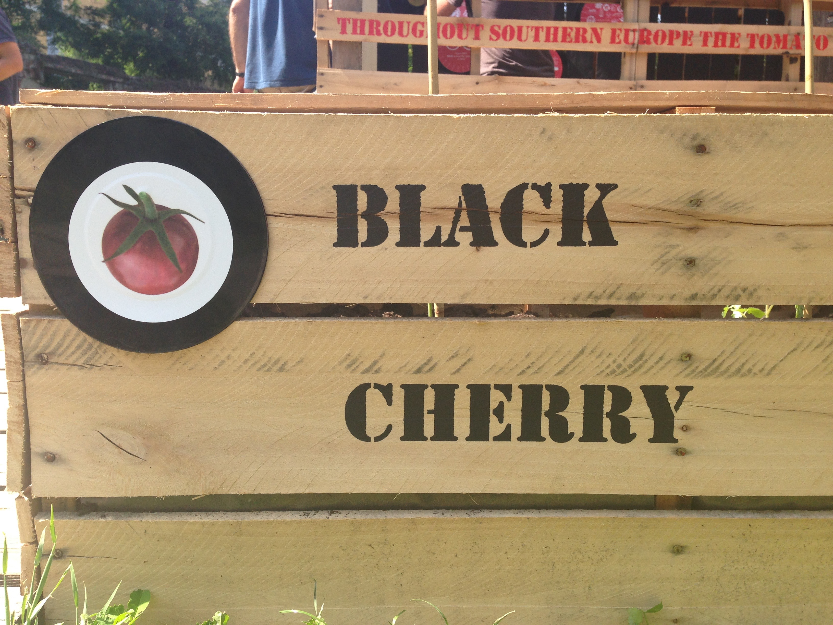 Exponymi - Pomodori Black Cherry