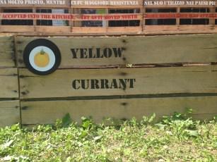 Exponymi - Pomodori Yellow Currant