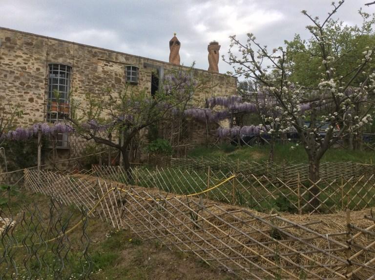 Monococco in Umbria - L'orto Sinergico