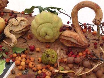 Mandillo dei Semi 2015 - Biodiversità Parmense