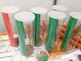 Mandillo dei Semi 2015 - I Cereali della Rete dei Semi Rurali