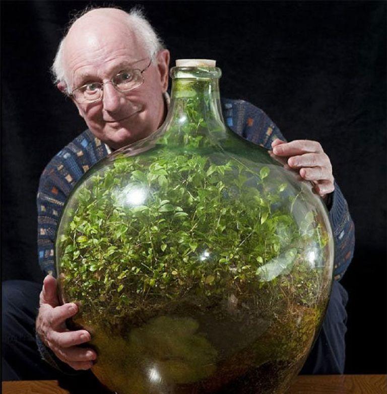 Giardino in Bottiglia - David Latimer