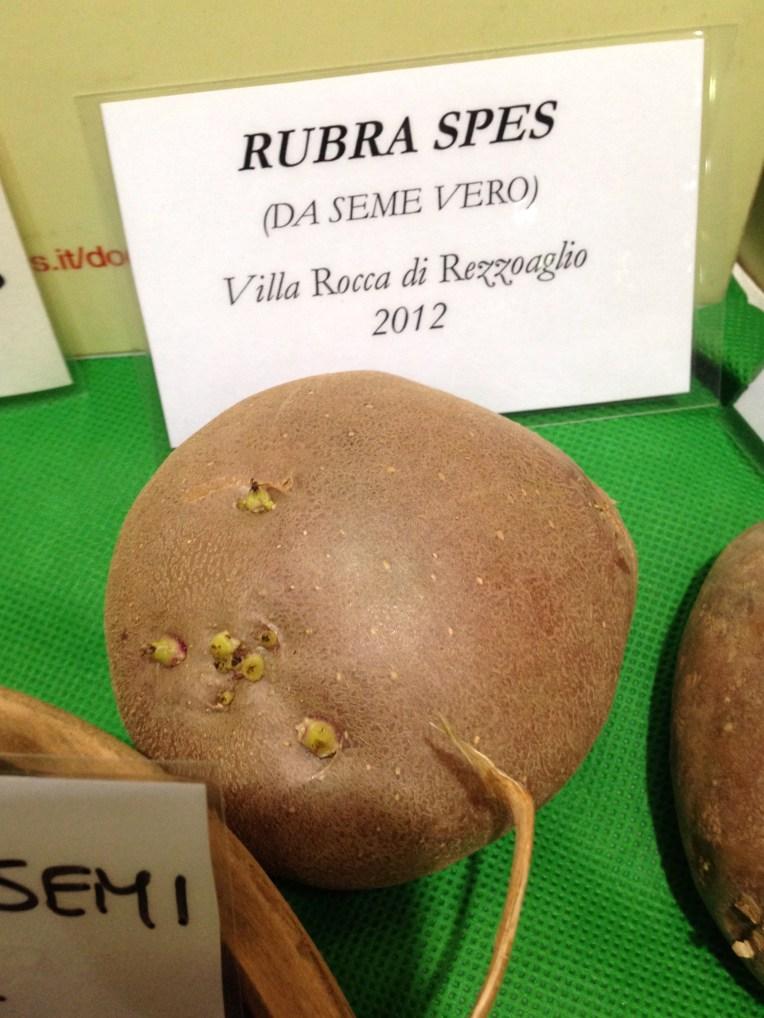 Rubra Spes da Seme Vero - Villa Rocca di Rezzoaglio