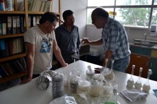 Mostrantdo diferentes tipos de hongos que podrian afectar a los frutos