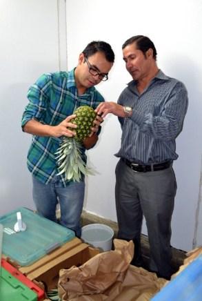 Explicando el control sobre los hongos de la Piña