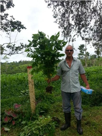 El productor Franklin Villalobos, Rogriguez fue seleccionado como parte del Plan piloto de ganadería baja en emisiones. desarrollado por CORFOGA el INTA, el MAG y el CICA. En la imagen muestra la soya a 50 dias de desarrollo.