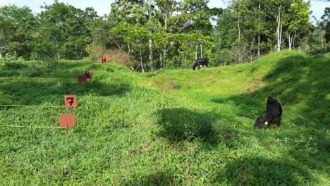 Los resultados preliminares mostraron que encontró que la calidad nutricional de la soyaUCR-CIGRAS-06 es superior al de las pasturas usuales en la zona Norte de Costa Rica .